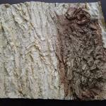 Formabdruck Baum
